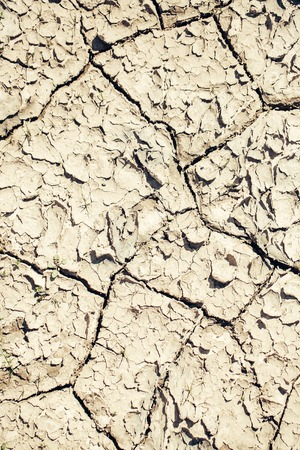 waterless: Dry soil with cracked waterless surface texture of grey earth on natural background