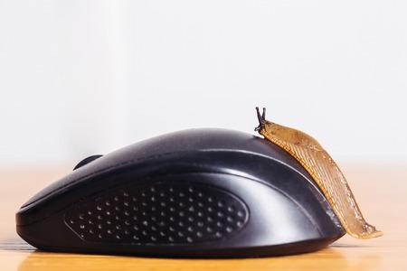gastropod: Computer mouse wireless and garden slug gastropod mollusc snail copy space on grey background Stock Photo