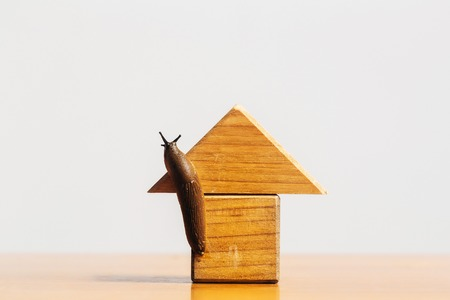 gastropod: Wooden house of toy building blocks with snail slug gastropod mollusc copy space on light background