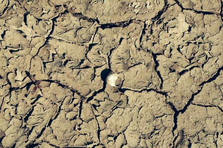 waterless: Dry soil with cracked waterless surface texture of grey earth on natural background with shell Stock Photo