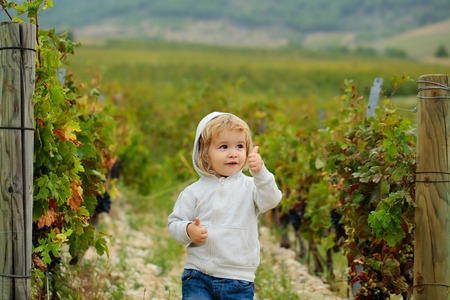 Cute baby boy child with curly blond curly hair in gray hoody and jeans show cool on vineyards background Stock Photo