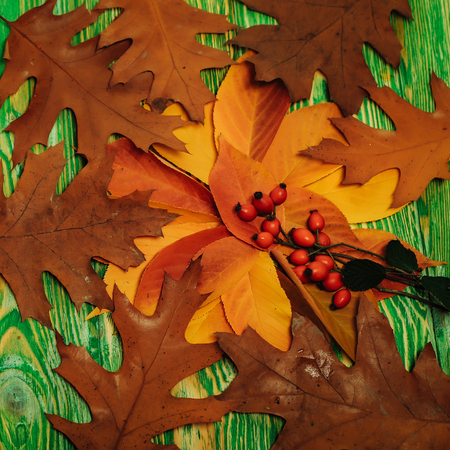Brown oak and other leaves lays in circle with red rowan berries on the branch on green wooden background