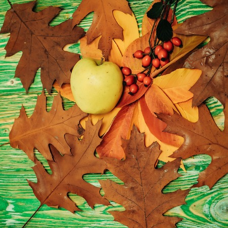 Green apple and brown oak leaves with red rowan berries on branch lay in circle on the wooden background Фото со стока