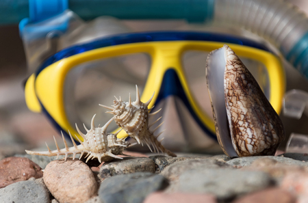thorn and cone conchs, marine shells or seashells, sea snails, on grey and red stones, rocky surface, on sunny day on blurred blue and yellow diving mask background. Idyllic summer vacation, treasure