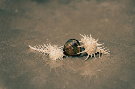pearl in transparent sea or ocean water on sandy beach. beautiful marine shells, seashells, spiral conchs on sunny on sand. Idyllic summer vacation, teamwork, treasure. lack of water and life on mars Stock Photo