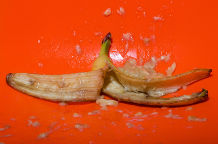 yellow color fruit, ripe mellow banana squeezed, mashed, or crushed with skin and flesh drops, splashes, on bright orange background. Vitamin and healthy eating