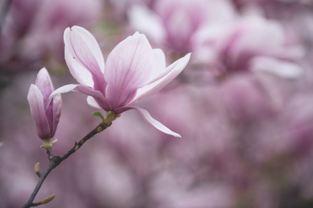 flower background, Valentines day, Mothers day, summer or spring nature in garden Stock Photo