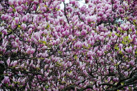 flower background, Valentines day, Mothers day, summer or spring nature, landscape design in garden