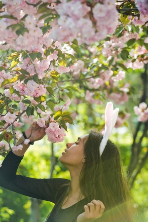woman with long, brunette hair and rosy bunny ears smelling blossoming sakura flowers from tree in spring park on sunny day on blurred floral environment. Easter. Springtime