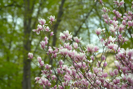 blossom. floral design and gardening, womens or mothers day, spring and summer, nature and environment, spa and healthy lifestyle