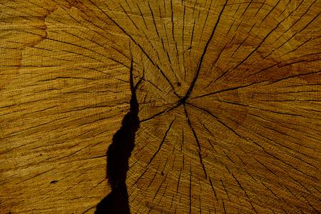 균열 및 노란색 나무 배경으로 연간 반지 나무 나무 줄기. 숲 황폐화. 벌채 반출. 목재 생산 스톡 콘텐츠