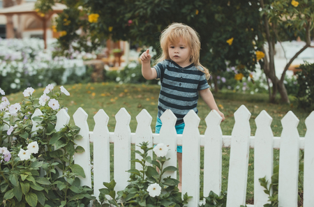 small world: little boy at the wooden fence on the grass with mobile phone outdoor