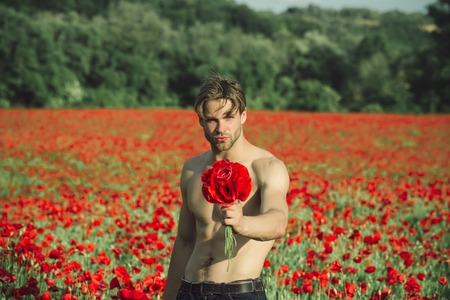 guy with muscular body and athletic torso hold flower bouquet in field of red poppy seed with green stem on sunny natural background, summer, drug and love intoxication, opium, valentines day