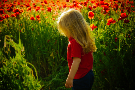 little boy or child with long blonde hair in red shirt in flower field of poppy seed with green stem on natural background, summer, spring, childhood and happiness, opium, ecology and environment