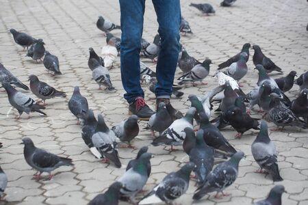 正方形に舗装された都市にハトと立っている青いデニム ジーンズの男性の足。灰色の都市景観。鳥の群れ。ライフ スタイル。デニムのファッション