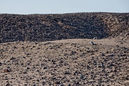 グレーとデザート ヒルズ砂青空の表面と岩のテクスチャです。バルハン、砂丘と荒涼とした風景。荒廃。旅行と旅行します。ワンダー ラスト
