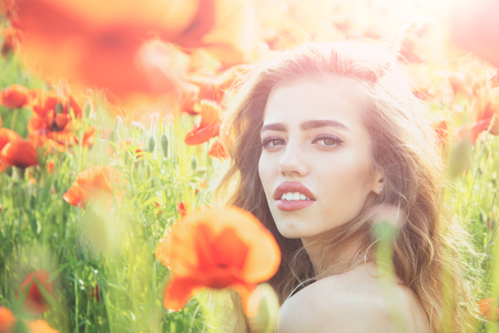 pretty woman or girl with long curly hair hold flower in field of red poppy seed with green stem on natural background, summer, spring, drug and love intoxication, opium