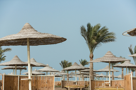 Sun parasols brown wooden sunbeds and green palm trees at beach on summer vacations and resort on blue sky background