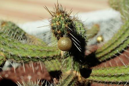 선인장 새 해 공입니다. 화창한 날에는 날카로운 등뼈가있는 식물. prickle에서 매달려 골든 bauble입니다. 크리스마스 휴일 축 하 개념입니다. 사막 자연