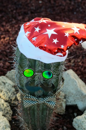 Cactus dressed as santa claus in red hat with glasses, moustache, bow tie outdoors on stony background. Desert nature and natural environment. Christmas and new year celebration concept