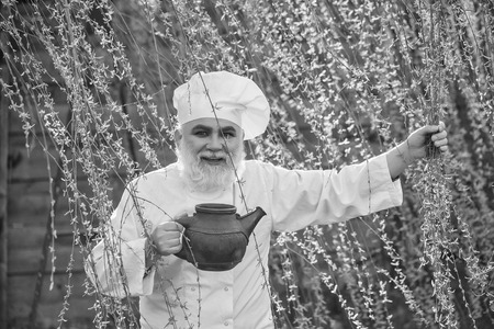 bearded man cook chef in uniform and hat with long beard on smiling face holding iron old tea kettle in blooming tree branches outdoor on natural background Stock Photo