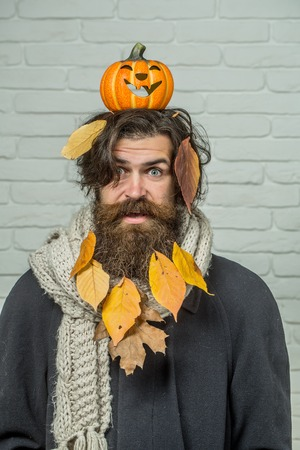 Halloween trick or treat. Holiday celebration concept. Excited man holding pumpkin on head on brick wall. Autumn and harvest season. Hipster with yellow leaves in beard hair. Фото со стока