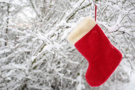 Christmas sock hanging on tree covered with snow. Red santa stocking on snowy forest background. xmas and new year present, gift and surprise. Winter holidays celebration concept