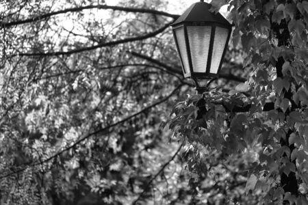 Pretty picturesque view of vintage black lantern on background autumn vivid yellow green foliage of tree beautiful seasonal changes natural wallpaper decor urban scene backdrop outdoor, horizontal Stock Photo