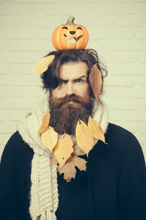 Halloween hipster frown with yellow leaves in beard hair. Man holding pumpkin on head on brick wall. Autumn and harvest season. Holiday celebration concept. Trick or treat.