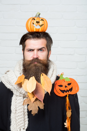 Halloween man with pumpkins on head and shoulder. Hipster with yellow leaves in beard hair on brick wall. Autumn and harvest season. Holiday celebration concept. Trick or treat.