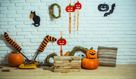 Halloween traditional symbols on wooden and brick background. Pumpkins, striped stockings, black cat and bat on white brick wall. Autumn holidays celebration concept
