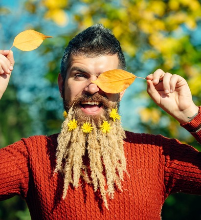 barber: Spikelet beard at barber and hairdresser. Man with natural spikelet beard sunny fall. Floral fashion and beauty. Hipster or happy guy in autumn nature outdoor. Season and autumn leaves with flower. Stock Photo