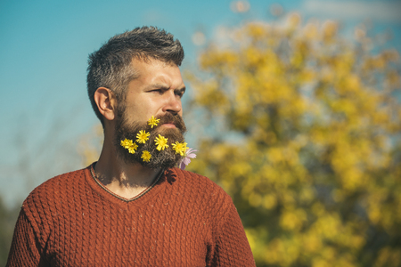 Hipster or bearded guy in autumn nature outdoor. Floral fashion and beauty. Season and autumn leaves. Man with natural flower beard sunny fall. dandelion beard at barber and hairdresser. Stock Photo