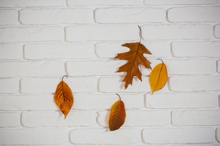 vintage seasonal composition. autumn leaves on white brick wall. autumn season and weather. autumn background with orange and yellow leaf. ecology and floral design. Stock Photo
