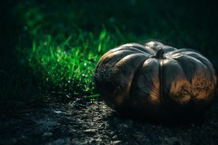 Halloween citrouille d'or en toile d'araignée. citrouille sur l'herbe. récolte d'automne et nourriture de vacances. fête d'halloween et célébration de vacances., luxe et succès Banque d'images - 88757210