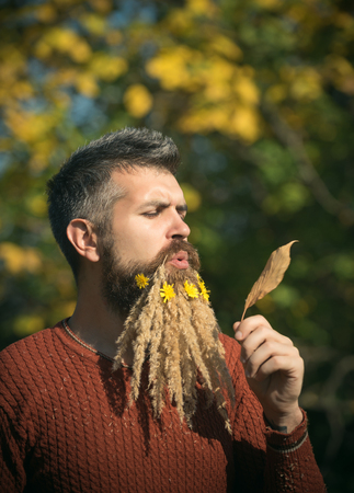 Hipster or bearded guy in autumn nature outdoor. Spikelet beard at barber and hairdresser. Floral fashion and beauty. Season and autumn leaves with flower. Man with natural spikelet beard sunny fall. Stock Photo