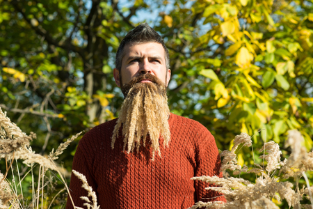 Spikelet beard at barber and hairdresser. Man with natural spikelet beard sunny fall. Hipster or bearded guy in autumn nature outdoor. Floral fashion and beauty. Season and autumn holiday. Stock Photo