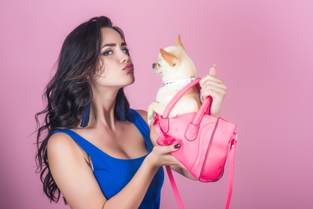 Girl owner kiss chihuahua dog in pink bag. Woman with long brunette hair in blue dress with puppy on violet background. Pet, companion, friend, friendship concept.