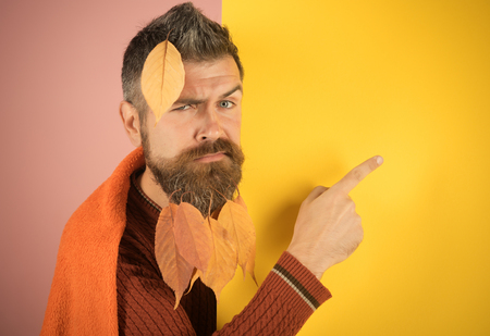 leaves beard at barber and hairdresser. Man with natural yellow fall leaves beard in plaid. Hipster or bearded guy in autumn on pink background. cold and illness. Season and autumn.