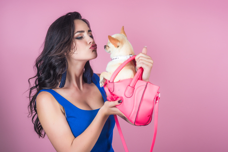 Woman owner kiss chihuahua dog in pink bag. Girl with long brunette hair in blue dress with puppy on violet background. Pet, companion, friend, friendship concept.