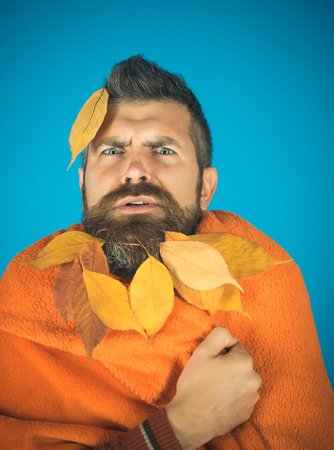 Man with natural yellow fall leaves beard in plaid. Hipster or bearded guy in autumn on blue background. Season and autumn. cold and illness. leaves beard at barber and hairdresser. Zdjęcie Seryjne - 89745751