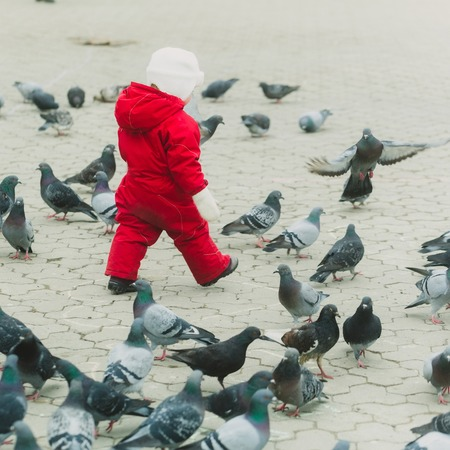 Kid walking in red warm overall with pigeons on paved city street. Grey urban landscape. Flock of birds. Childhood, leisure, activity and having fun outdoors