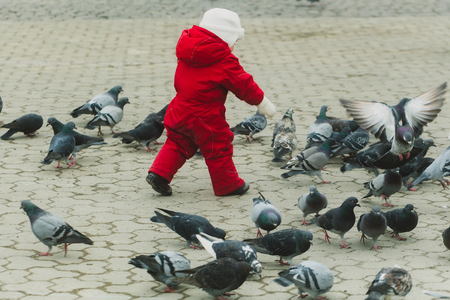 Toddler chasing pigeons on paved city street. Small, little baby playing in red warm overall on grey urban landscape. Flock of birds. Childhood, leisure, activity and having fun outdoors Stok Fotoğraf