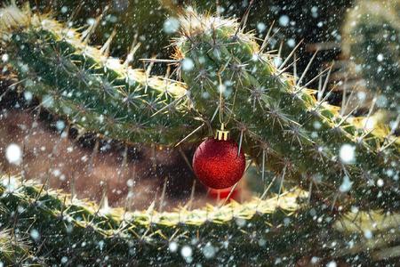 크리스마스 휴일 축 하 개념입니다. 선인장 새 해 공입니다. 빨간색 bauble 가시 나무에서 매달려입니다. 화창한 날에는 날카로운 등뼈가있는 식물. 사막