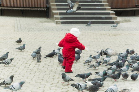 Baby chasing pigeons on paved city square. Small, little child playing in red warm overall on grey urban landscape. Flock of birds. Childhood, leisure, activity and having fun outdoors Stok Fotoğraf - 92352463