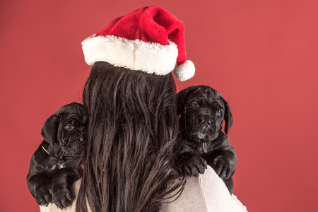 girl with pet at winter party on red background. santa woman with pet, dog year. New year, cute puppy at clock. Year of dog, holiday celebration. Cane corso puppy at female hand, copy space