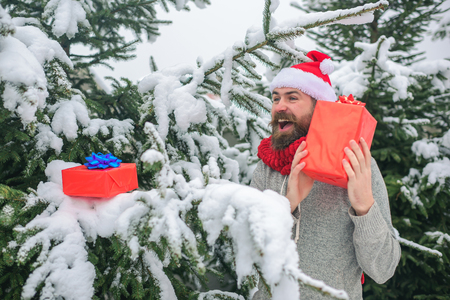 Hipster santa at Christmas tree in snowy winter forest. Happy holiday and xmas. Bearded man in santa hat at new year. Boxing day, party celebration. Christmas happy man with beard hold present box.