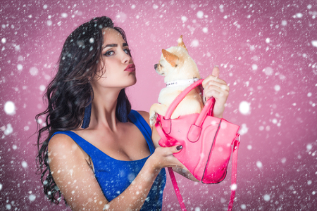 new year christmas snow concept new year christmas snow concept Girl owner kiss chihuahua dog in pink bag. Woman with long brunette hair in blue dress with puppy on violet background. Pet, companion Stock Photo
