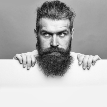 handsome bearded man with long lush beard and moustache on serious face with white paper sheet in studio on grey background, copy space Stok Fotoğraf
