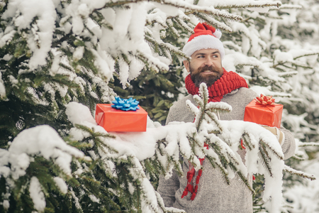 Christmas happy man with beard hold present box. Hipster santa at Christmas tree in snowy winter forest. Happy holiday and xmas. Bearded man in santa hat at new year. Boxing day, party celebration.